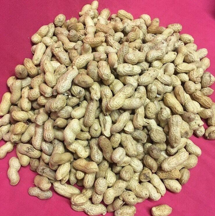 Wild Garden Bird Shelled Peanuts 9 Kg Monkey Nuts High Predein Fat Oil Grade A
