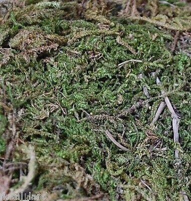 100G ARTIFICIAL NATURAL FAKE GREEN MOSS FOR FLOWER DIY ARRANGEMENTS HOME DECOR