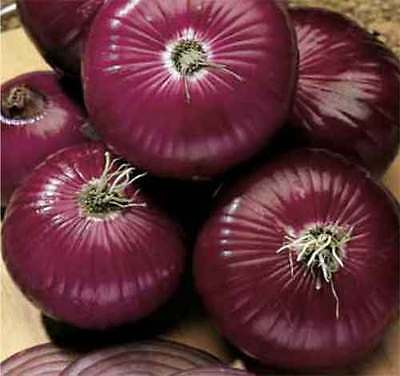 ORGANIC VEGETABLE  ONION RED AMPOSTA  500 SEEDS