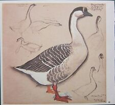 BEAUTIFUL VINTAGE BIRD PRINT ~ DOMESTIC CHINESE GOOSE
