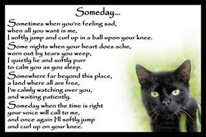 Image is loading Black-Cat-pet-bereavement-memorial-sympathy-Rainbow-Bridge-