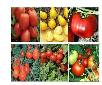 500 Tomato Seeds Mix 12 Different Kinds Garden Mix Tomato Mix