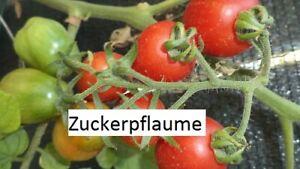 Zuckerpflaume-Tomate-10-Tomaten-Samen-Ernte-2019-aus-bio-Anbau-Nr-217