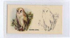 (Ja9565-100)  PHILLIPS,BIRD PAINTING,BARN-OWL,1938#39