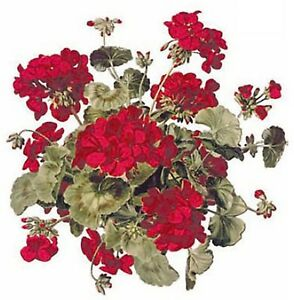 Red-Geranium-Flowers-Select-A-Size-Waterslide-Ceramic-Decals-Bx