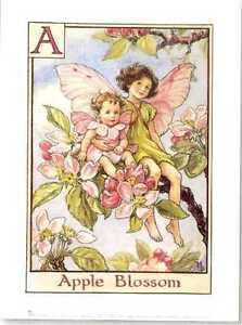 Cicely-Mary-Barker-flower-fairies-alphabet-fine-art-prints-set-of-2-vintage-rare