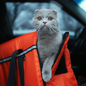5 Types Of Cat Carriers Finding The Right Fit