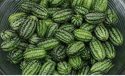 Vegetable - Cucamelon - 10,000 Seeds