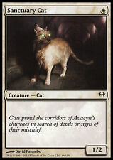 4x Gatto del Santuario - Sanctuary Cat MTG MAGIC DKA Dark Ascension English