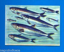 ANIMALI - Lampo 1964 - Figurina-Sticker n. 294 - SARDINA -New