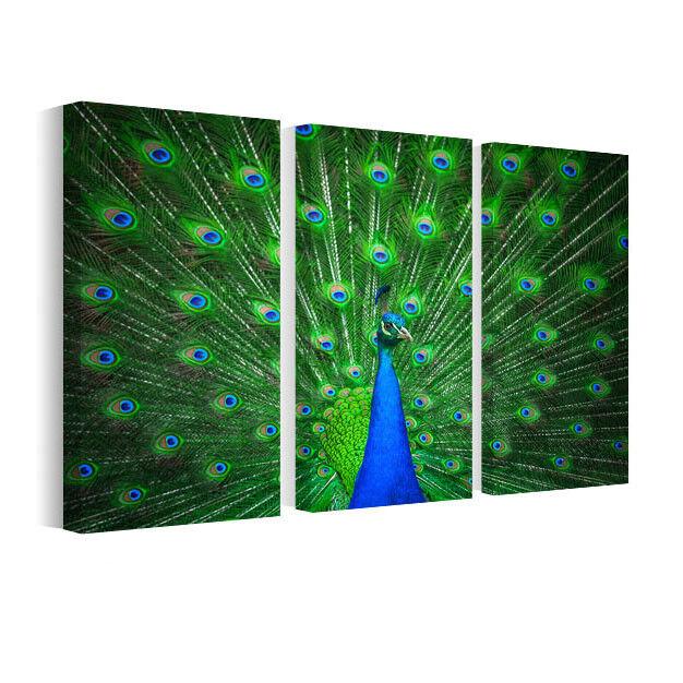 Leinwand Bilder Portrait der schönen Pfau, Wandbilder Tiere B3D115