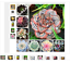 100-Garden-Greenhouse-Cactus-Seed-Rare-Succulent-Perennial-Herb-Plants-Bonsai thumbnail 1