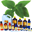 3ml-Essential-Oils-Many-Different-Oils-To-Choose-From-Buy-3-Get-1-Free thumbnail 7