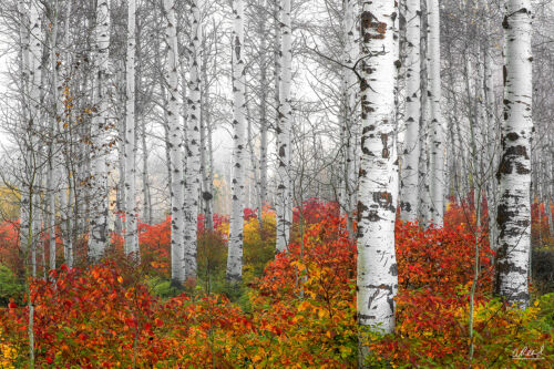 "Aaron Reed 40x60 /""Echoes Of Fall/"" LUMACHROME Fine Art Acrylic Photograph #//100"