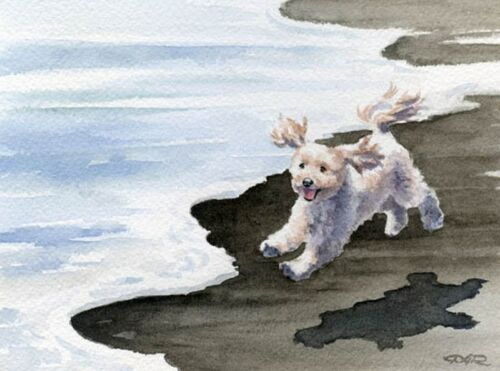 COCKAPOO AT THE BEACH Watercolor 8 x 10 ART Print by Artist DJR