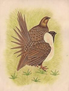Details about Quail Bird Art Indian Handmade Wild Life Nature Miniature  Ethnic Decor Painting