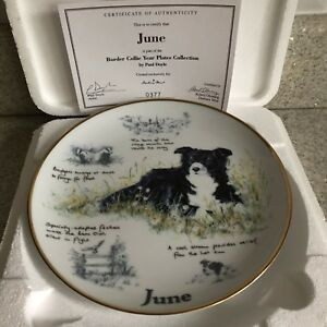 BORDER-COLLIE-DOG-YEAR-PLATE-JUNE-DANBURY-MINT-PAUL-DOYLE-BOX-amp-CERTIFICATE