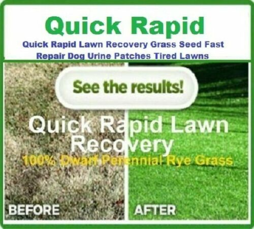 Quick Rapid Lawn Recovery Grass Seed Fast Repair Dog Urine Patch IVISONS Lawns