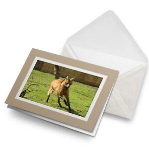 Greetings-Card-Biege-Cute-Maned-Wolf-Dog-Animal-3450
