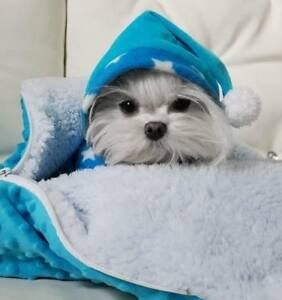 Hunde-Schlafsack-Hundeschlafsack-Kuschelecke-Spielplatz-MINKY-SKY-BLUE-dogszone