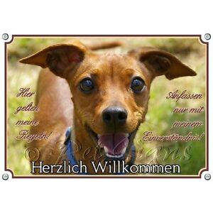 Bouclier de chien - Miniature Pinscher Rehpinscher Haute qualité, qualité 1a