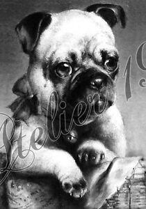 Bügelbild Vintage Shabby Nostalgie Mops Hund 3026 Ebay