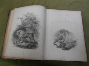 DD-RARE-EARLY-1800s-ANIMAL-STUDIES-BOOK-CABINET-OF-QUADRUPEDS