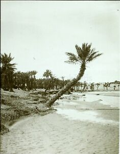 MAROC-Figuig-Oued-Zouzfana-c1900-Photo-Stereo-Vintage-Plaque-Verre-VR8L4