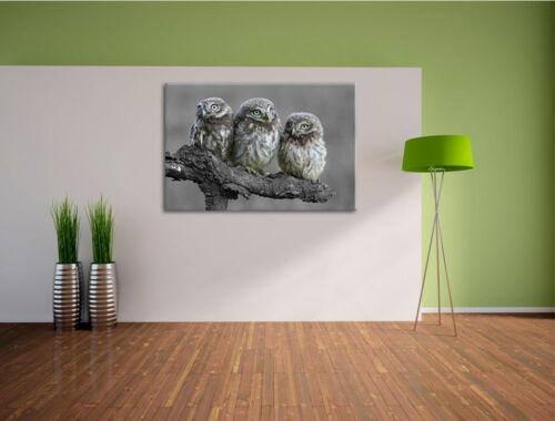 Eulen auf Ast schwarz//weiß Leinwandbild Wanddeko Kunstdruck