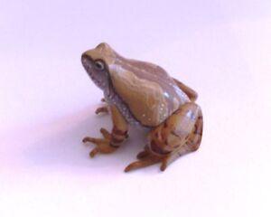 RARE-Takara-Yujin-Kaiyodo-Ornate-Narrow-Mouthed-Frog-Figure