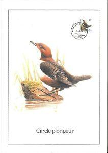FDC-2459-Oiseau-Buzin-sur-gravure-format-A4