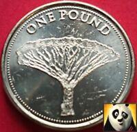 2016 GIBRALTAR £1 One Pound The Dragon Tree Dracaena Marginata AUNC Coin