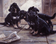 GERMAN SHEPHERD DOG GSD ALSATIAN PUPPIES LIMITED EDITION PRINT  by John Trickett