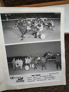 WINDSOR-Raceway-Harness-Horse-Race-Ontario-December-5-1971-Owner-039-s-Photograph
