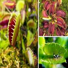 40pcs/bag Carnivorous Catch Cordyceps Seeds With Care Instructions EASY TO PLANT