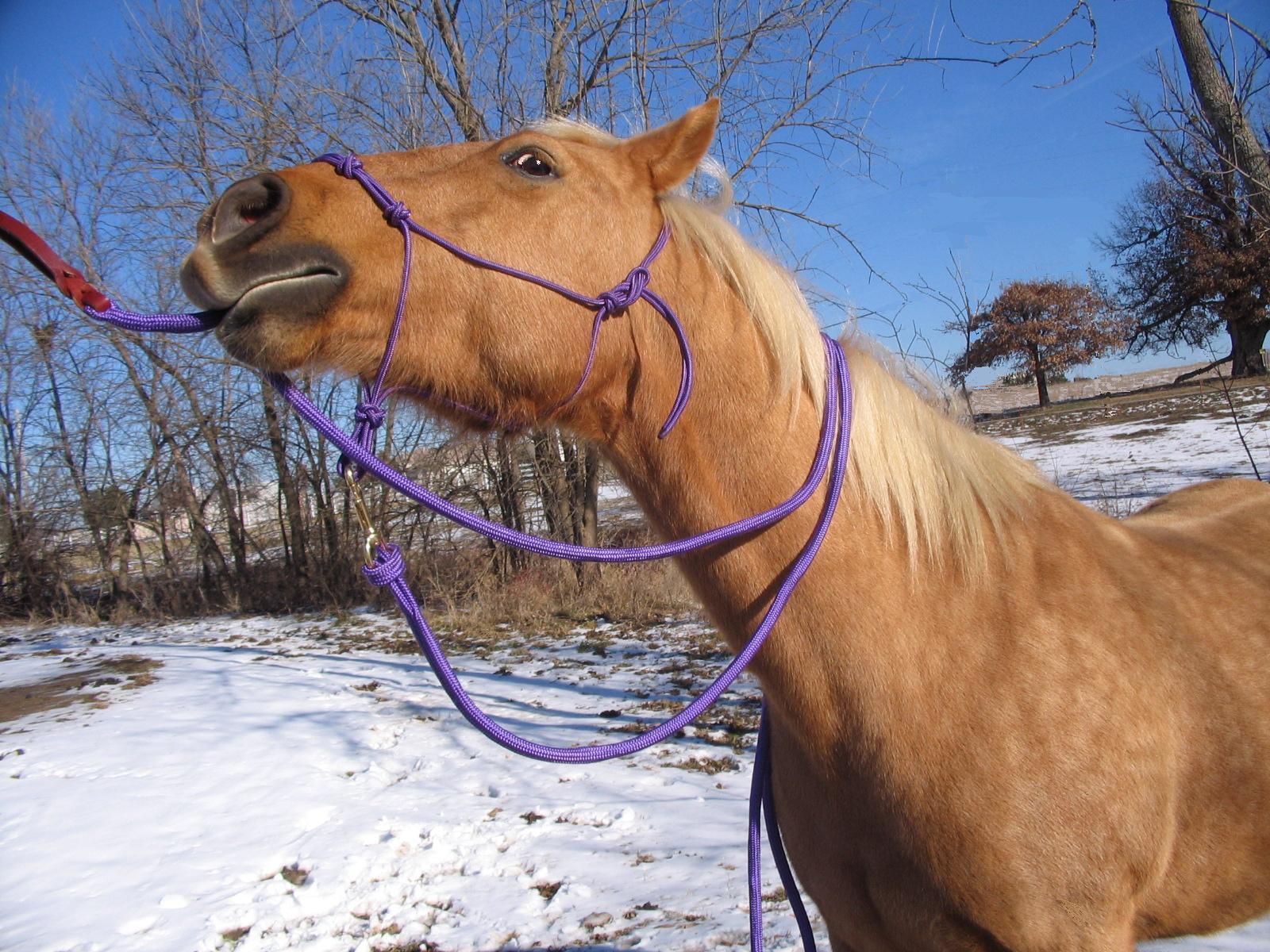 THOMEY NATURAL HORSE TRAINING HALTER & LEAD ROPE  PURPLE