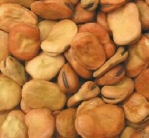 15-Fava-Bean-Seeds-Giant-Bean-Seeds