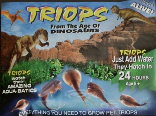 A Living Dinosaur Kit Grow Your Own Triops