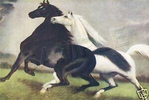 SPIRITED-HORSES-3-Storm-THE-ALARM-CANVAS-Art-Print-TINTED-11-034-x-8-1-2-034