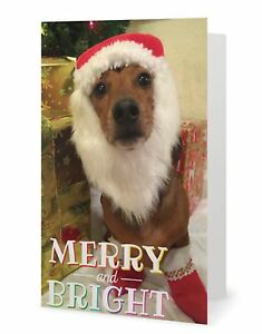 image is loading scrappy dizzle designz 20 holiday cards christmas dachshund - Dog Holiday Cards