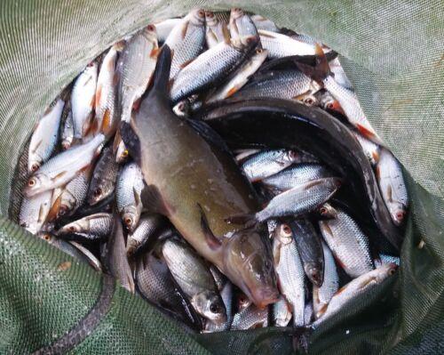 1 kg KFS Birdfood ROSSO CARPA CARP 1kg//4, 00eur