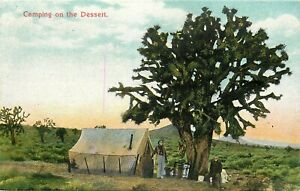 DB-Postcard-CA-M116-Camping-on-the-Desert-Men-Joshua-Tree-Tent-Germany-Mojave