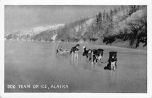 Dog-Sled-Team-On-Ice-Alaska-Huskies-ca-1940s-Vintage-Postcard