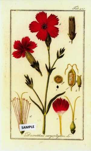 """6 Botanical Herbal Prints from /""""Pictures of Medicinal Herbs"""" Published in 1798"""
