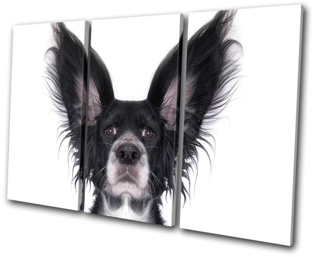 Animals Funky Cool Dog TREBLE arte LONA pared arte TREBLE Foto impresion 9cddfc