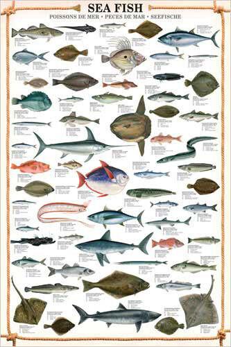 SEA FISH 59 Saltwater Species Sportsfisherman Fly Fishing Wall Chart Poster