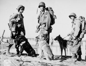 Wwii bw photo us soldiers with war dogs pacific theatre ww2 1164 image is loading wwii b amp w photo us soldiers with publicscrutiny Image collections