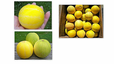 25 VINE PEACH SEED RARE VEGETABLE FRUIT - DELICIOUS !! A JOY TO GROW AND EAT TOO