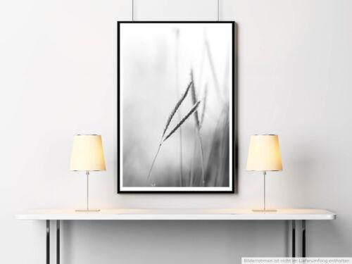 Naturfotografie 60x90cm Poster  Grashalme im Wind