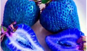 USA SELLER 200 SEEDS Blue Strawberries Berries Plants Garden Planting 200 Pack